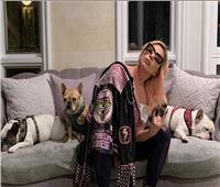 مطربة أمريكية ترصد نصف مليون دولار لمن يجد «كلبيها»