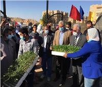 وزير الزراعة يوزع شتلات الخضروات والفاكهة مجاناً على مزارعي سيناء
