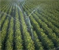 12 توصية من «الزراعة» للتطوير في مجال وقاية النباتات