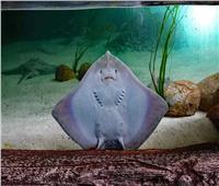 صدق أو لا تصدق| «سمكة» تضحك لصياد ..فيديو