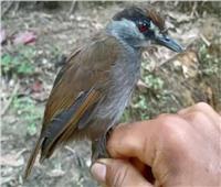اختفى منذ ١٧٠عاما.. ظهور مفاجئ للطائر «ذو الحواجب السوداء»