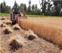 """رد حكومي حاسم على """"تراجع مساحة زراعة القمح"""" في 2021"""