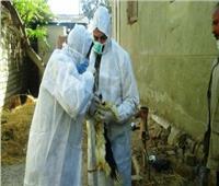 محافظ كفر الشيخ : تحصين 35 ألفا و390 طائرا من الأمراض الوبائية