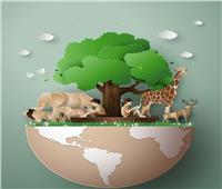 في اليوم العالمي للأحياء البرية.. 5 أسباب للاحتفال تعرف عليهم