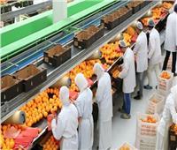 «بكرة أجمل».. ارتفاع صادرات مصر الزراعية إلى 821 مليون دولار