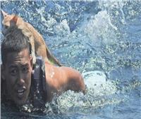 «الرفق بالحيوان».. شاب يخوض معركة بطولية لإنقاذ 3 قطط من «الموت المحقق»