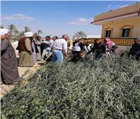 استكمال توزيع شتلات الزيتون على مزارعي بئر العبد