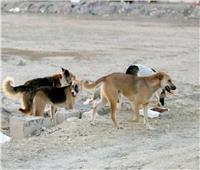 مقترح برلماني بتصدير الكلاب الضالة للخارج