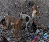 وزارة البيئة: خريطة طريق مصرية ضرورية لمواجهة أزمة الكلاب الضالة