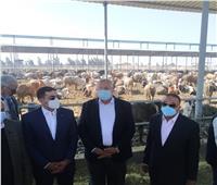 محافظ الإسكندرية: مزرعة النوبارية إضافة لمكتسبات الثروة الحيوانية