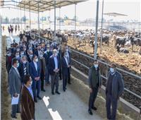 وزير الزراعة يفتتح مشروعا بطاقة 18 ألف رأس ماشية في الإسكندرية