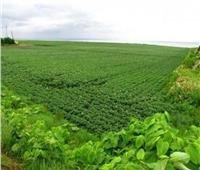 الزراعة: إنشاء مزارع وتصدير المنتجات والخبرات المصرية للسودان