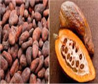 يعود إلى نحو 5000 عام.. تاريخ بذور الكاكاو عند الفراعنة