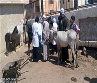 جامعة سوهاج تنظم قافلة بيطرية لقرية أولاد إسماعيل