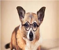 دراسة| الكلاب تكشف الكذب