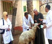 تحصين 125 ألف رأس ماشية ضد «الحمى القلاعية» بالفيوم