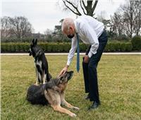 لهذا السبب.. طرد «كلبي بايدن» من البيت الأبيض