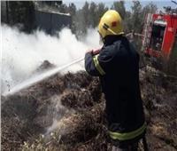 حريق هائل يلتهم 21 ألف «بالة قش» بكفرالشيخ