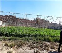 زراعة المنوفية: الموافقة على ترخيص 54 مزرعة دواجن و52 أخرى للماشية