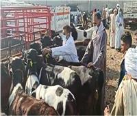 الإسكندرية تحصد المركز الثاني في تحصين الماشية
