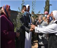 «بحوث الصحراء» يوزع ٥٠ ألف شتلة زيتون مجانًا بمطروح وسيوة