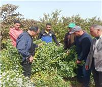 «الزراعة»تنظم 11 مدرسة حقلية في 10 محافظات خلال أسبوع