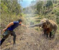 بالصور| فيل يتعرف على بيطري عالجه قبل 12 عاما