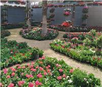 «الإرشاد الزراعي»: عارضو معرض زهور الربيع يشكرون وزير الزراعة| صور