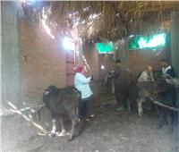 تحصين 582 ألف رأس ماشية وضبط 3 طن من اللحوم والدواجن الفاسدة بالمنوفية