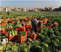 «تساعد في زيادة الحاصلات».. تعرف على فوائد الزراعة التعاقدية