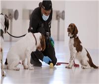 عن طريق «شم العرق».. الكلاب تكشف مصابي «كورونا»