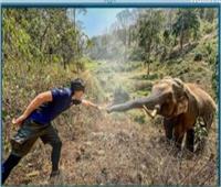 فيل يتعرف على طبيبه المعالج بعد 12 عاما | فيديو