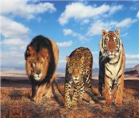 حكايات  تعلموا الحكمة من «الوحوش».. فهود ونمور وأسود نموذج لـ«رجال الأعمال»