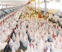 أسعار الدواجن في الأسواق اليوم 20 مارس.. الدجاج البلدي تبدأ بـ٣٠ جنيه للكليو