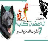 إنفوجراف | إذا تعرضت لـ«عضة كلب».. 7 خطوات للعلاج السريع