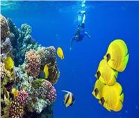 محميات طبيعية وأديرة.. 7 مزارات سياحية تشتهر بها البحر الأحمر