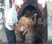 إعدام طن جمبري فاسد بالقاهرة