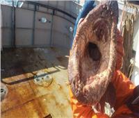 بالصور| حيوان بحري مخيف يثير الرعب بين رواد «السوشيال ميديا»