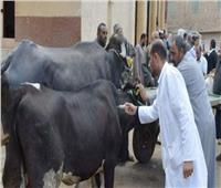 تحصين 3 ملايين رأس ماشية ضد الحمى القلاعية| فيديو