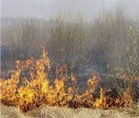 السيطرة على حريق في 4 أفدنة قصب بقنا