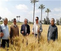 بزيادة 22 أردبًا للفدان.. زراعة أصناف عالية الإنتاج من القمح بدمياط