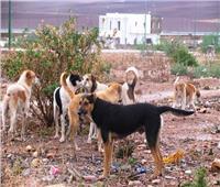 «مجزرة كلاب بشعة» تثير غضب رواد «السوشيال ميديا» بالسعودية