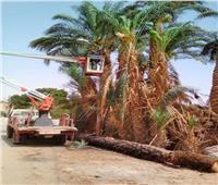 إصلاح عطل مفاجئ بخط كهرباء بسبب سقوط شجرة بالمنيا