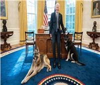 كلبا بايدن يعودان إلي البيت الأبيض مره أخري