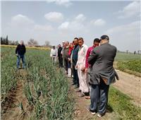 الزراعة: تنفيذ 13 مدرسة حقلية في 7 محافظات خلال أسبوع | صور