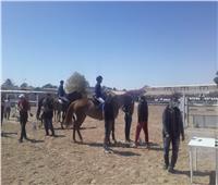 ختام المرحلة الأولي منفعاليات البطولة المحلية للفروسية بشرم الشيخ