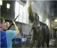 «جنون الفيلة».. هجوم ثان مدمر خلال عرض للسيرك