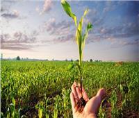 «الدلتا الجديدة».. أمل جديد لتأمين غذاء المصريين ولزيادة الرقعة الزراعية