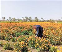 الفيوم أولى محافظات الجمهورية في الزراعة للتصدير