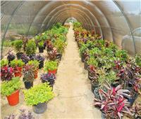 المنوفية: وحدة إنتاجية جديدة لبيع شتلات الزينة وأشجار الفاكهة.. صور